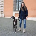 Greyhound Galgo
