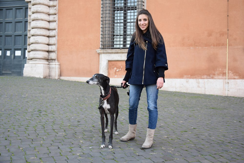 greyhound-galgo